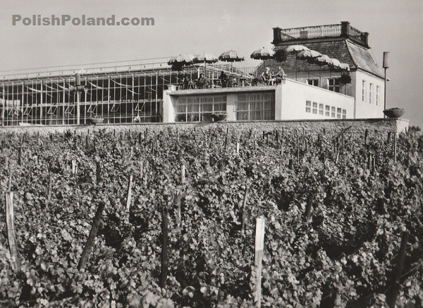 Polish vineyard